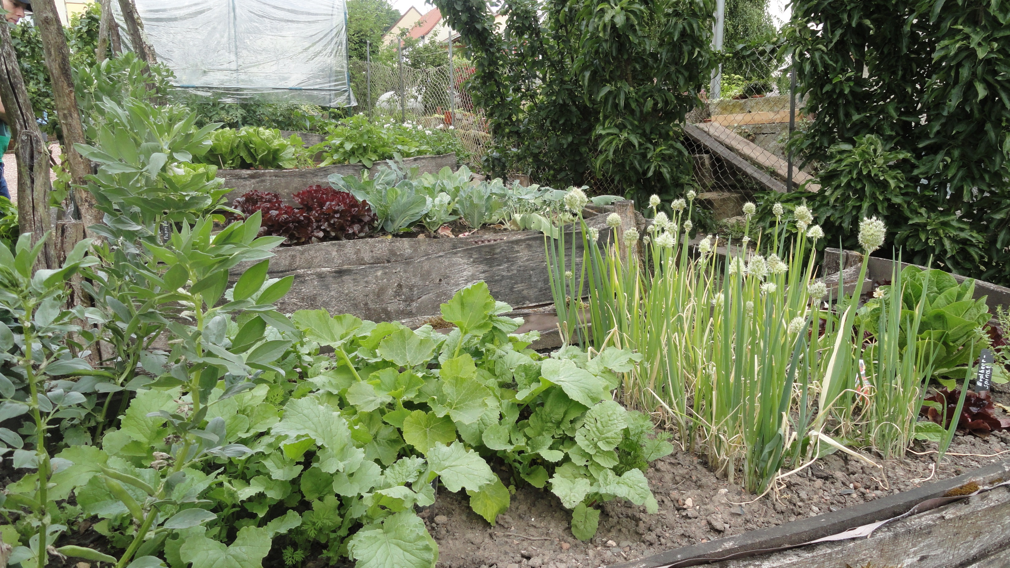 Gemüsebeet biblischer Garten Niederkirchen © Cora Berger