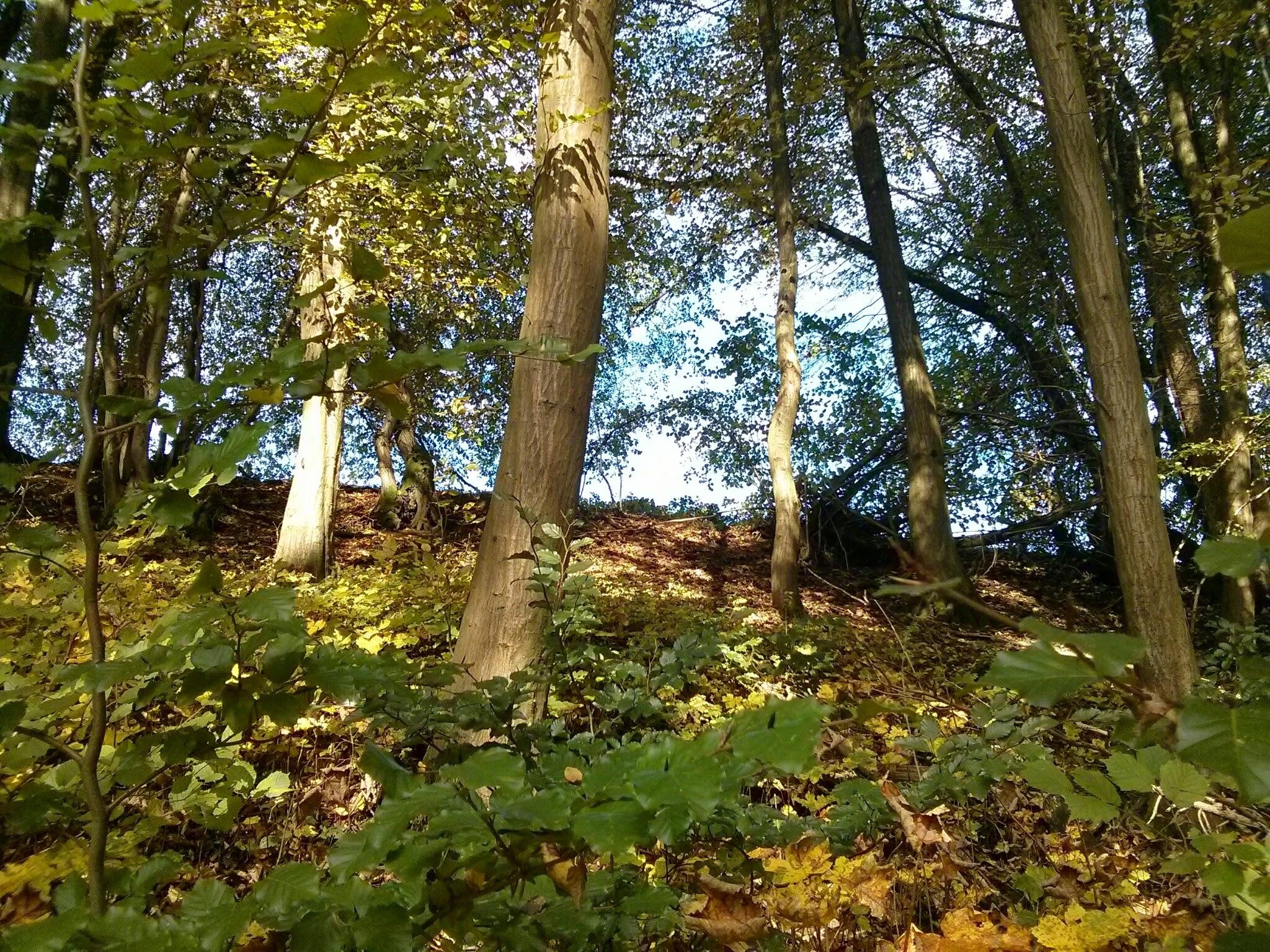 Herbstwald Saarland 2014 © Cora Berger