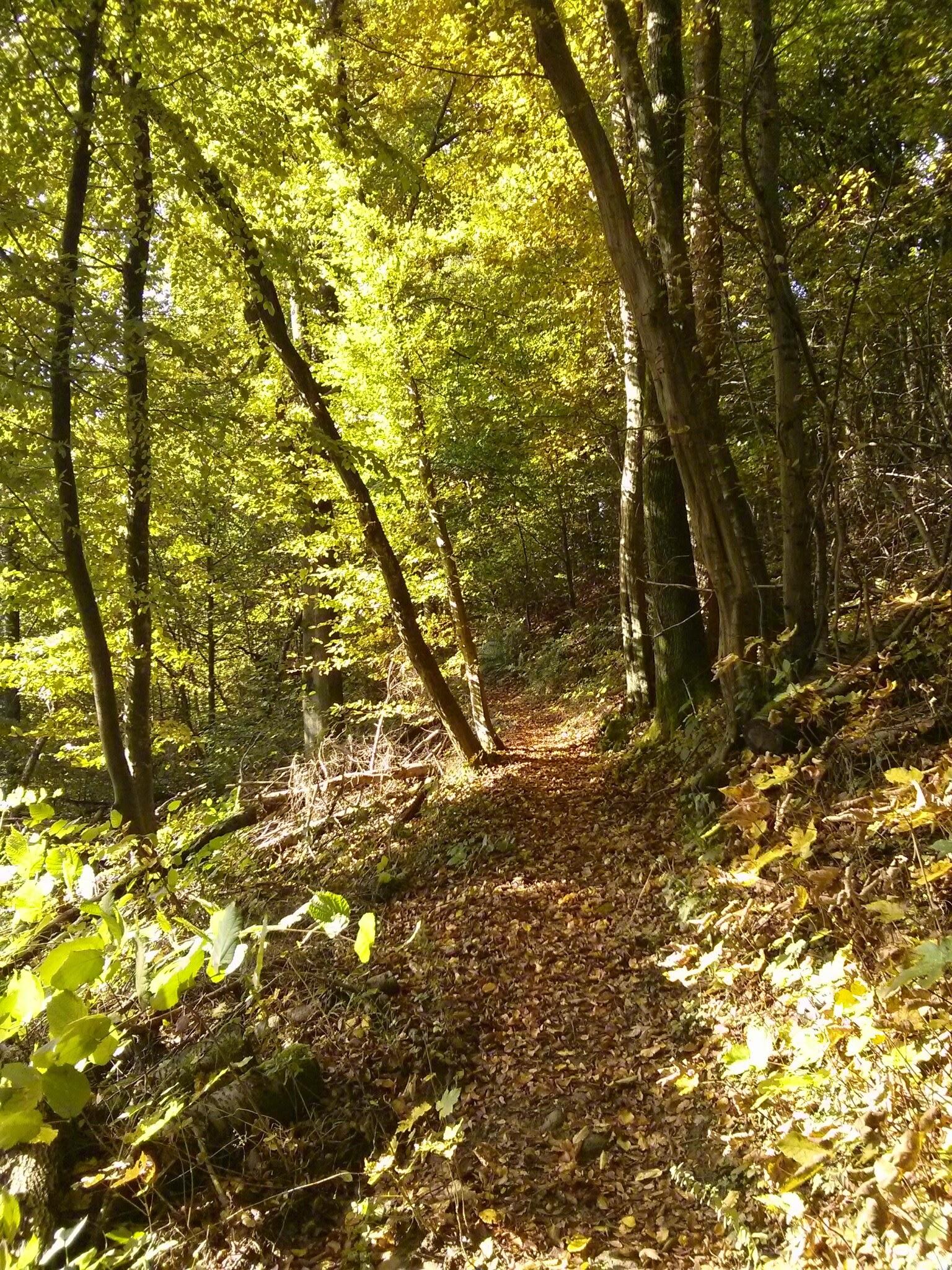 Waldweg im Hersbt © Cora Berger