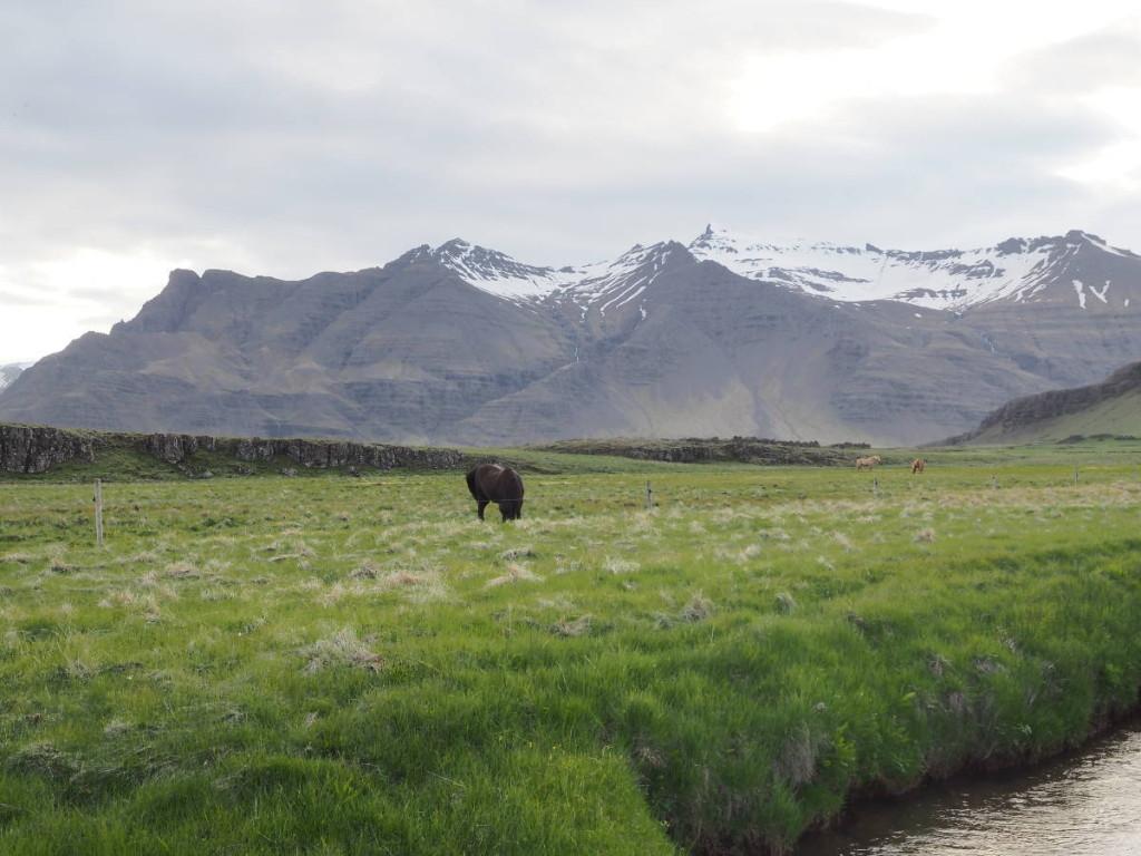 Islandpferd bei Vagnsstaðir © Cora Berger