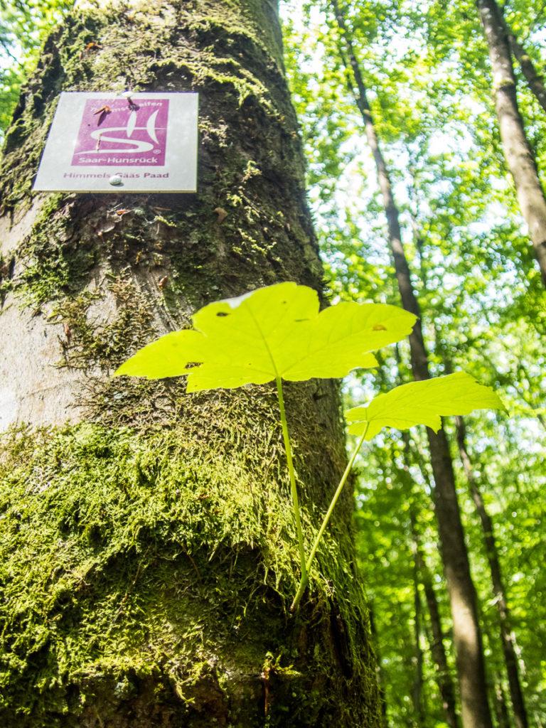 Kilometerschild Himmesl Gääs Paad am Baum © Cora Berger