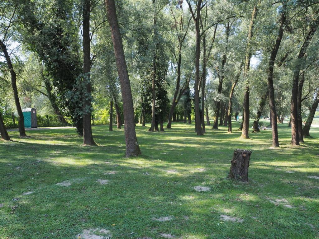 Liegewiese voller Bäume am Deglersee © Cora Berger