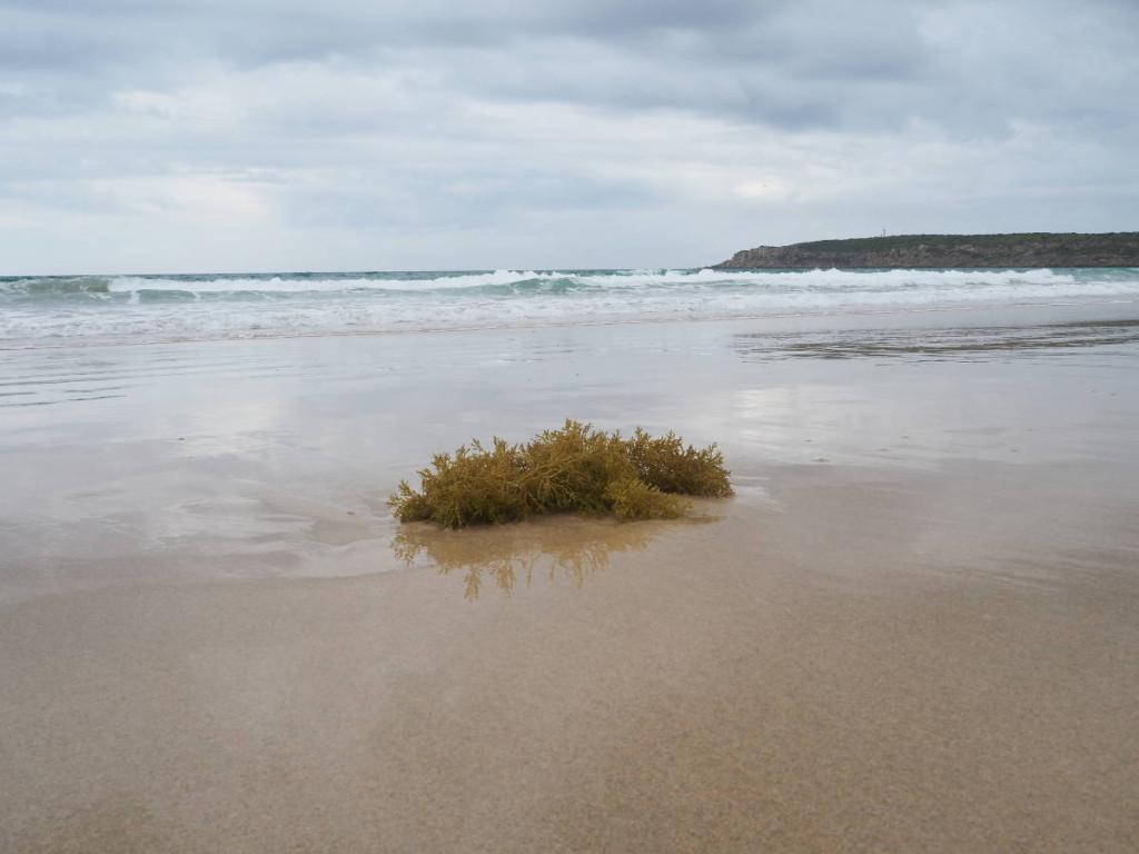 Algen am Strand von Bolonia © Cora Berger