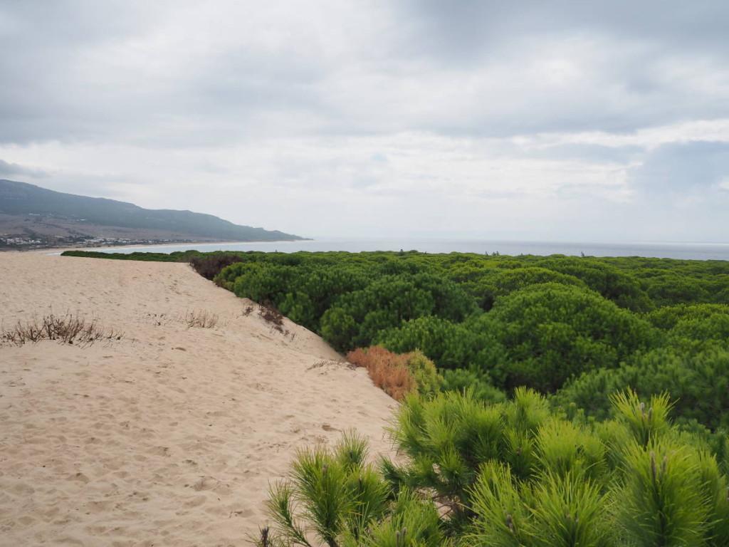 Blick von der Wanderdüne auf den Strand und das Meer bei Bolonia © Cora Berger