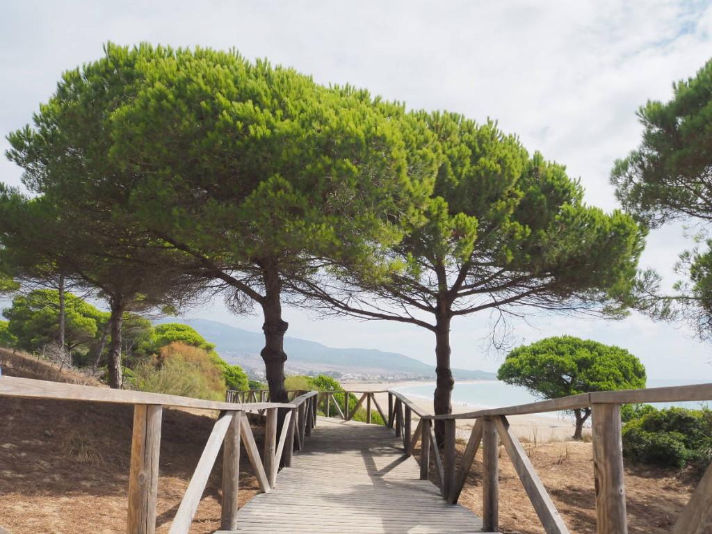 Holzsteg am Strand von Bolonia © Cora Berger