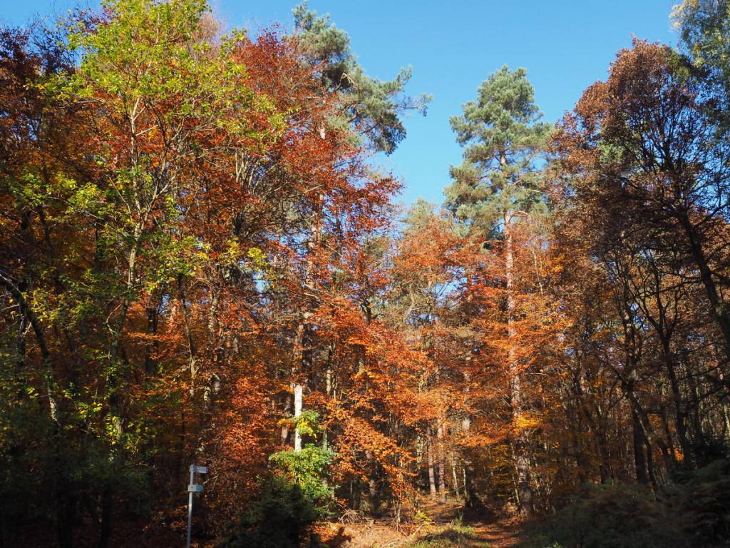 Herbstlicher Wald Weiskirchen © Markus Backes