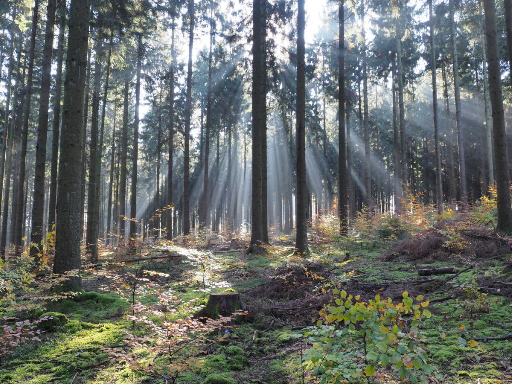 Sonnenstrahlen im Wald © Markus Backes