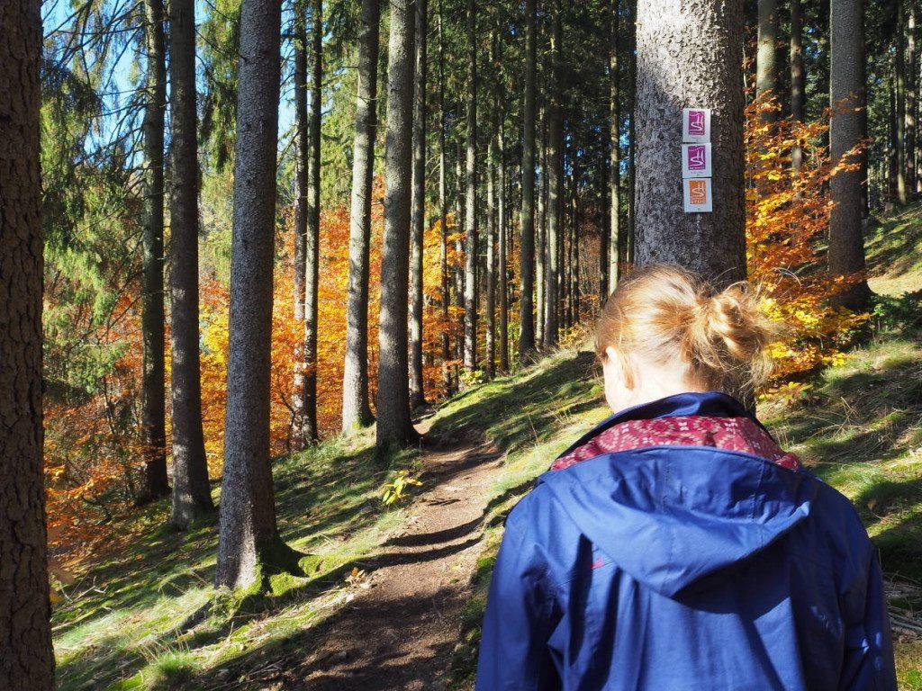 Traumschleife Zwei-Täler-Weg im Herbst © Cora Berger | greenshapedheart.de