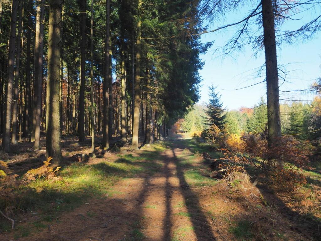Lange Schatten Herbstwald © Cora Berger