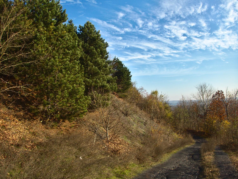 Weg auf der Halde Duhamel bei Ensdorf © Cora Berger