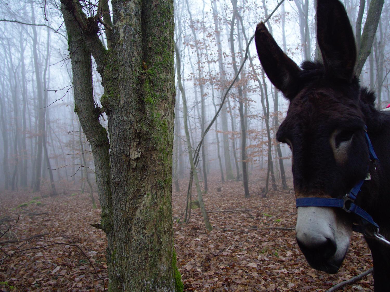 Eselwanderung im Wolfersheimer Wald © Cora Berger