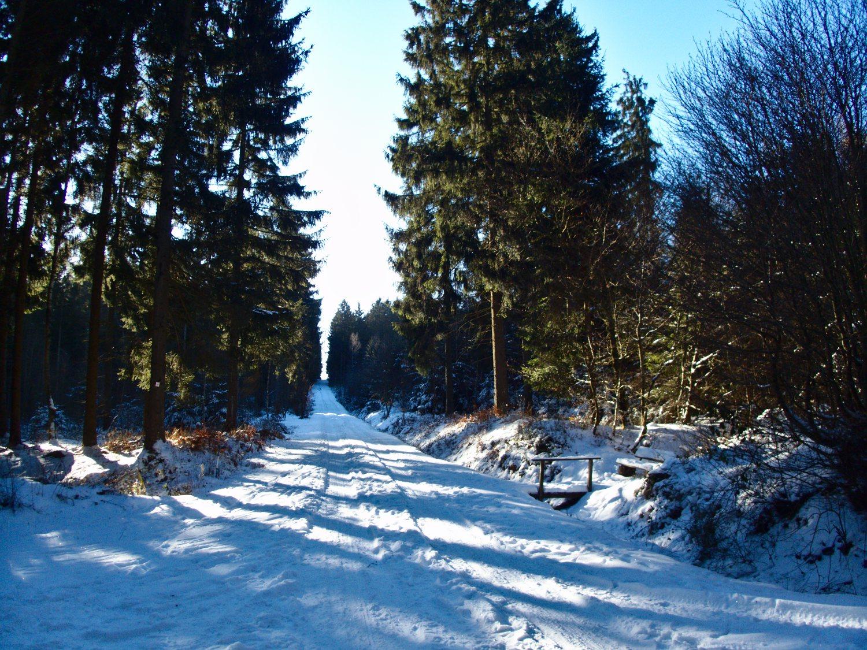 Winterwonderland bei der Schneeschuhwanderung Reinsfeld © Cora Berger | greenshapedheart.de