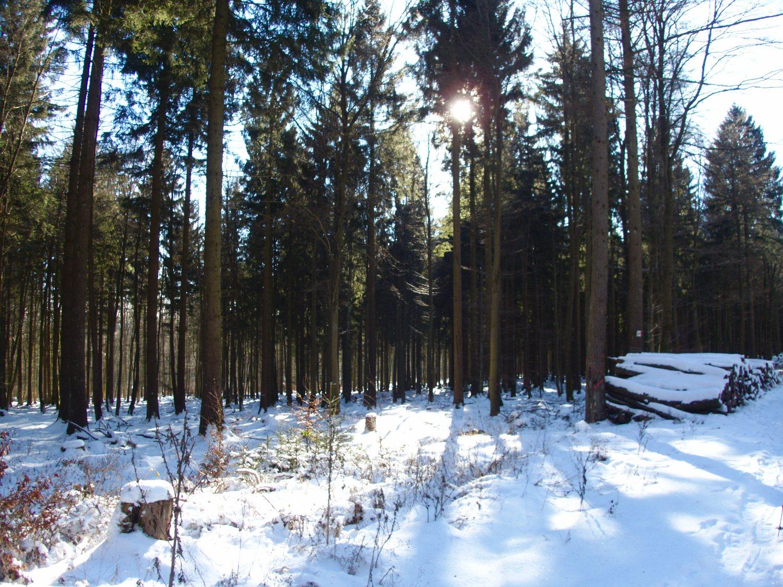 Winterwonderland bei Reinsfeld 2017 © Cora Berger | greenshapedheart.de