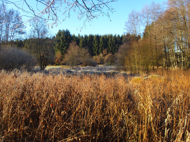 Winterliche Sumpflandschaft bei Mitlosheim © Cora Berger | greenshapedheart.de