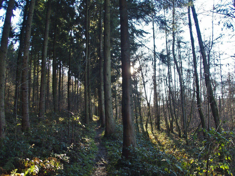 Im Zauberwald bei Mitlosheim © Cora Berger | greenshapedheart.de