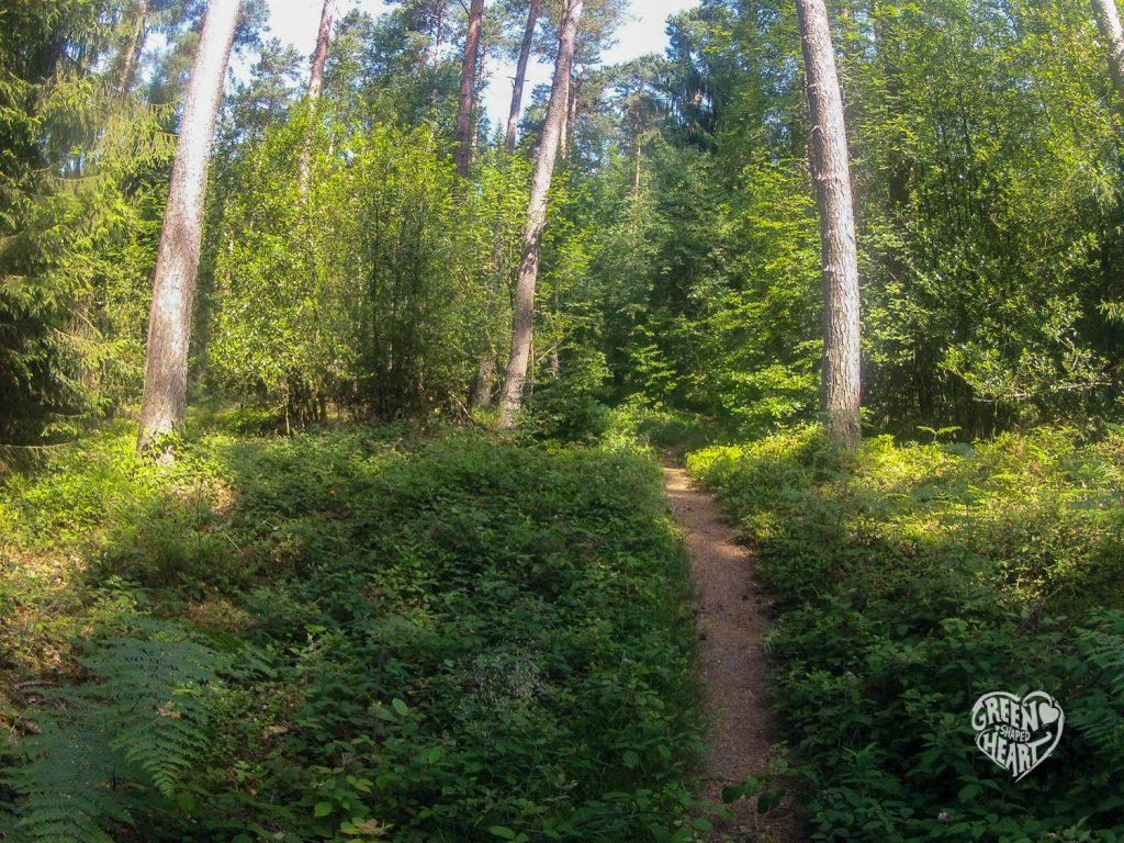 Wald bei Bollendorf im Felsenland Südeifel, Copyright: Cora Berger | greenshapedheart.de