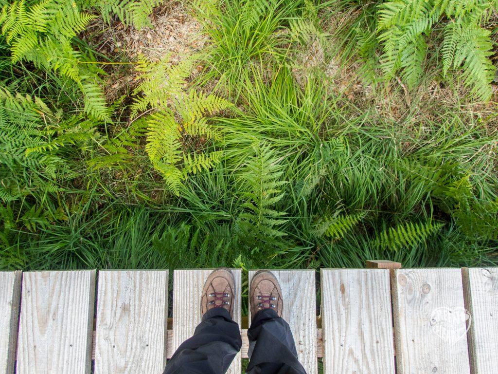 Auf dem Steg über das Ochsenbruch © Cora Berger | greenshapedheart.de