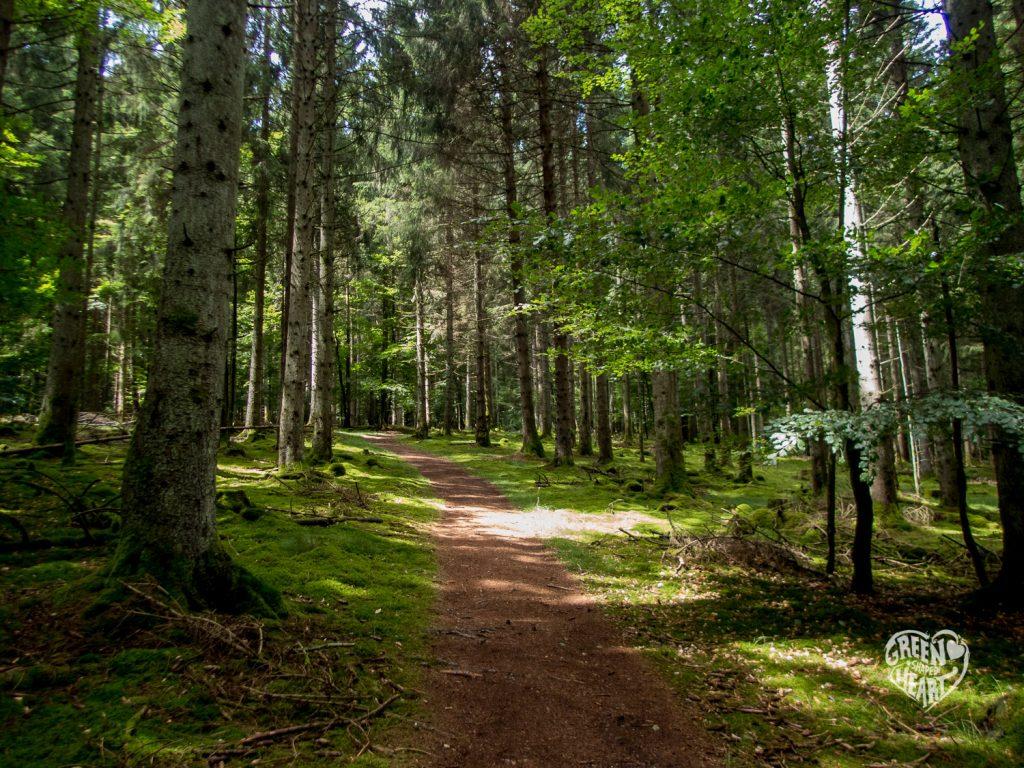 Waldboden auf der Börfinker Ochsentour im Nationalpark © Cora Berger | greenshapedheart.de