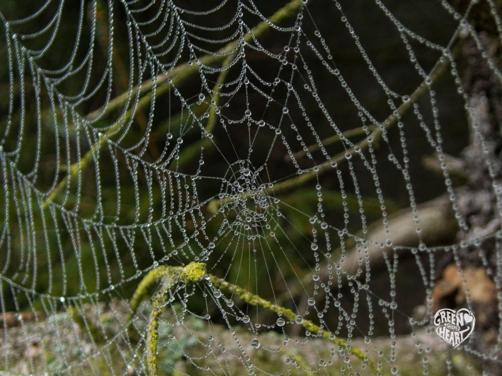 Spinnennetz im Frühnebel auf Wind, Wasser & Wacken © Cora Berger | greenshapedheart.de