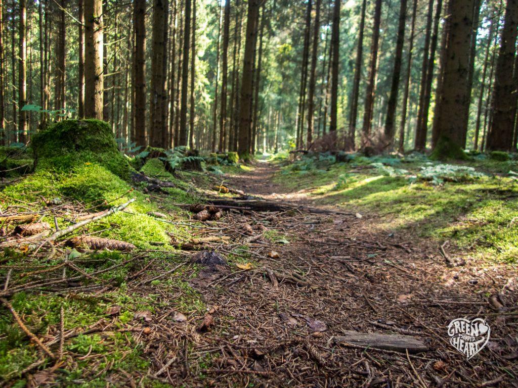Waldweg auf der Traumschleife Wind, Wasser & Wacken © Cora Berger | greenshapedheart.de