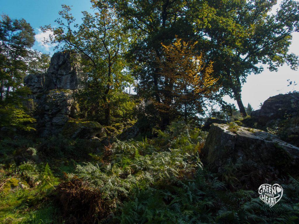 Herbststimmung am Berger Wacken © Cora Berger | greenshapedheart.de