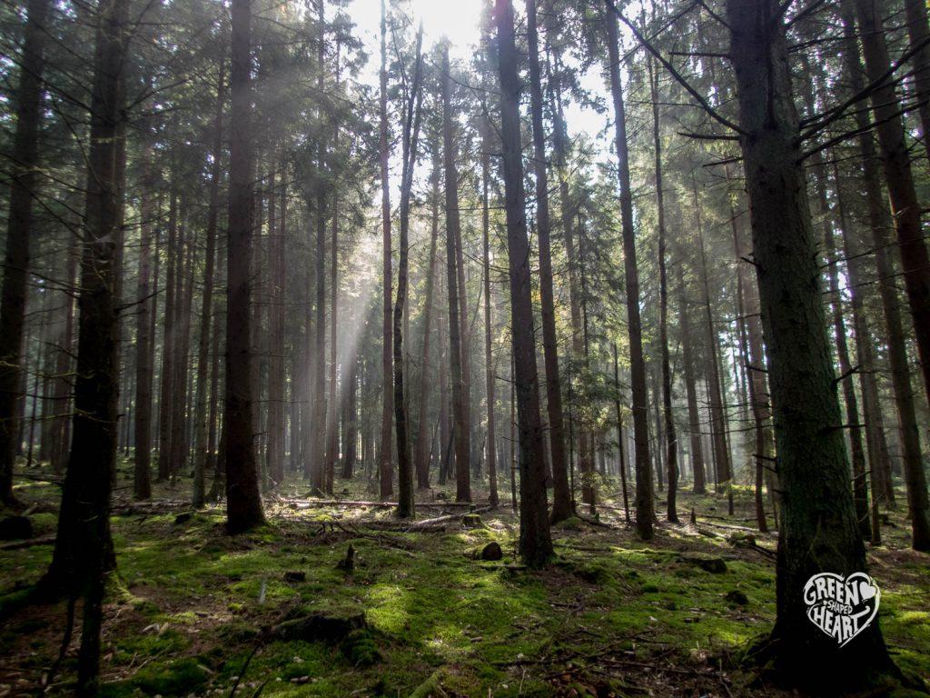 Sonne im Wald auf WInd, Wasser & Wacken © Cora Berger | greenshapedheart.de