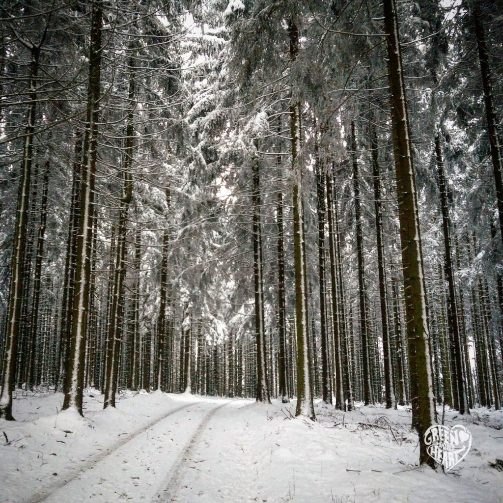 Winterwald am Idarkopf © Cora Berger | greenshapedheart.de