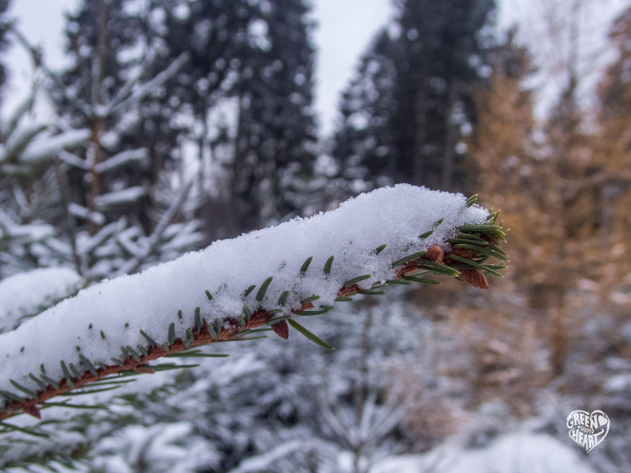 Erster Schnee am Erbeskopf © Cora Backes | Green Shaped Heart
