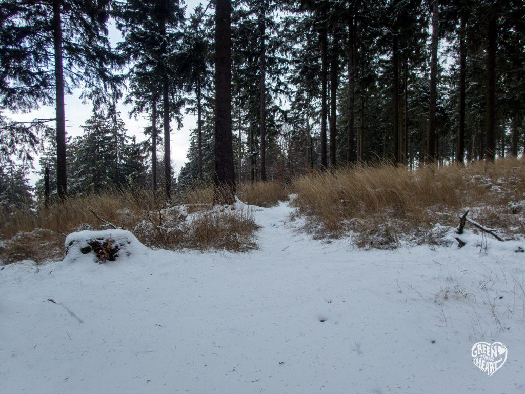Schnee am Erbeskopf im Nationalpark Hunsrück-Hochwald © Cora Backes | Green Shaped Heart