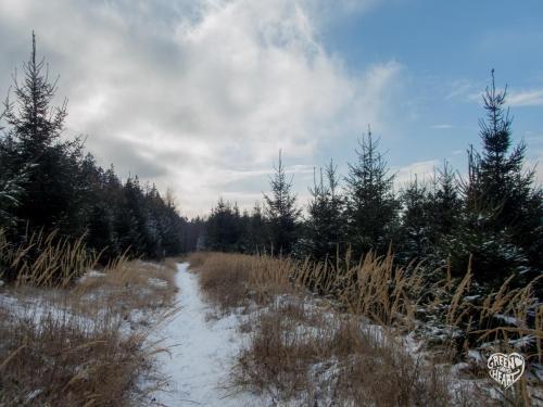Auf Gipfelrauschen im Bruch am Erbeskopf unterwegs © Cora Backes | Green Shaped Heart