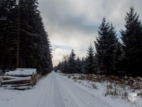 Mittelschneise am Erbeskopf im Schnee © Cora Backes | Green Shaped Heart